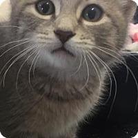 Adopt A Pet :: JEREMY - Fountain Hills, AZ
