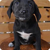 Adopt A Pet :: Lucy - Mechanicsburg, PA
