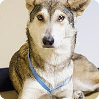 Adopt A Pet :: Nakita - New Smyrna Beach, FL