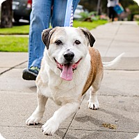 Adopt A Pet :: Brinkley - Los Angeles, CA