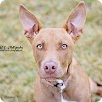 Adopt A Pet :: Gordon - Salt Lake City, UT