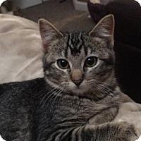 Adopt A Pet :: Diva - Fargo, ND
