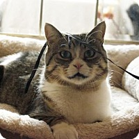 Adopt A Pet :: Tessa - Toronto, ON