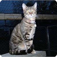 Adopt A Pet :: Kenta - Springdale, AR