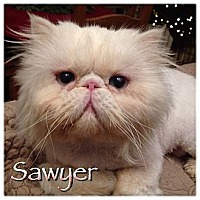 Adopt A Pet :: Sawyer - Beverly Hills, CA