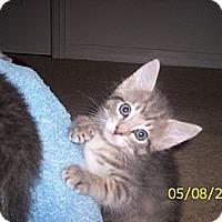Adopt A Pet :: Dino - Orlando, FL