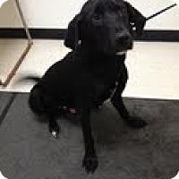 Adopt A Pet :: Lucas - Lancaster, VA