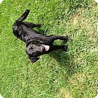Adopt A Pet :: Jett - Lewisville, IN