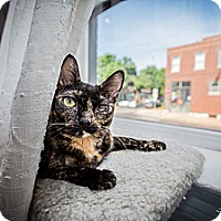 Adopt A Pet :: Chryssi - St. Louis, MO