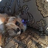 Adopt A Pet :: Daisy - Redding, CA