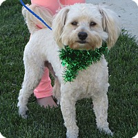 Adopt A Pet :: **HERBIE** - Stockton, CA