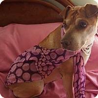 Adopt A Pet :: Millie - Mira Loma, CA