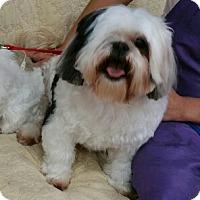 Adopt A Pet :: Murphy - Las Vegas, NV