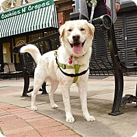 Adopt A Pet :: SUNDANCE KID - Jersey City, NJ