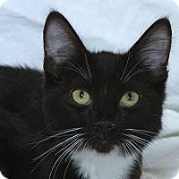 Adopt A Pet :: Buzz M - Sacramento, CA