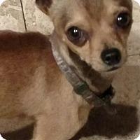 Adopt A Pet :: Abner - San Diego, CA