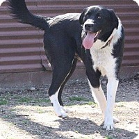 Adopt A Pet :: Elroy - Joplin, MO