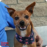 Adopt A Pet :: Donna - Santa Maria, CA