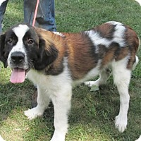 Adopt A Pet :: SAPHIRE -Gorgeous markings! - WOODSFIELD, OH