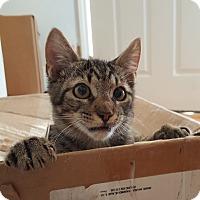 Adopt A Pet :: Abu - Smithfield, NC
