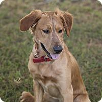 Adopt A Pet :: Danny - Daleville, AL