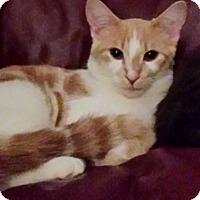 Adopt A Pet :: Uno - Chelsea - Kalamazoo, MI