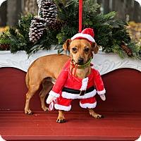 Adopt A Pet :: Tigger - Auburn, CA