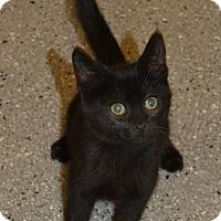 Adopt A Pet :: Tomato - Michigan City, IN