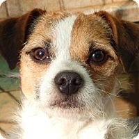 Adopt A Pet :: RALPHIE - Anderson, SC