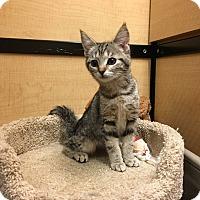 Adopt A Pet :: Cissy - Riverside, CA