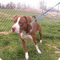 Adopt A Pet :: Cledus - Springfield, TN
