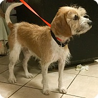 Adopt A Pet :: Santa - Phoenix, AZ
