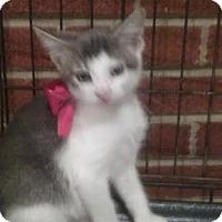 Adopt A Pet :: Victor - Harrisburg, NC
