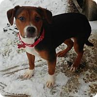 Adopt A Pet :: Emmy - Spotsylvania, VA