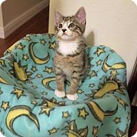 Adopt A Pet :: Miki - ROSENBERG, TX