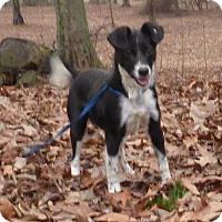 Adopt A Pet :: Sputnik - Hartford, CT