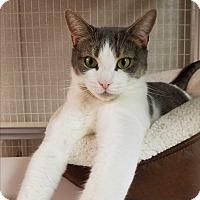 Adopt A Pet :: Dancer - Plainville, MA
