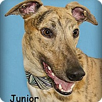Adopt A Pet :: Junior - Seattle, WA