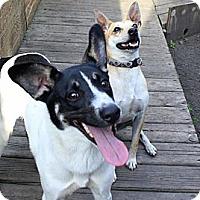 Adopt A Pet :: Cory - Albert Lea, MN