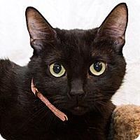 Adopt A Pet :: Teena - Irvine, CA