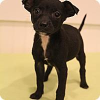 Adopt A Pet :: Paco - Wytheville, VA