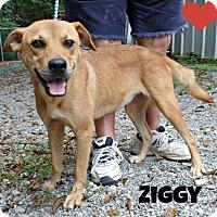 Carolina Dogs For Adoption Ny State