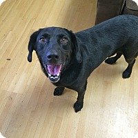 Adopt A Pet :: Major in CT - Manchester, CT
