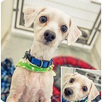Adopt A Pet :: KAOS - Sandusky, OH
