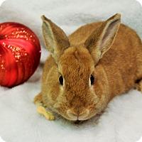 Adopt A Pet :: Gingersnap - Hillside, NJ