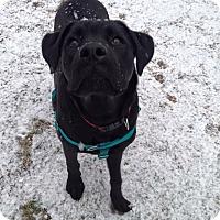 Adopt A Pet :: Einstein - Newtown, CT