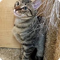 Adopt A Pet :: Samuel - Houston, TX