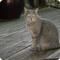 Adopt A Pet :: Maia - Bonita Springs, FL