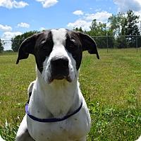Adopt A Pet :: Diesel - Bucyrus, OH