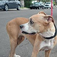 Adopt A Pet :: VERA - Chandler, AZ
